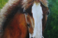 Pony in opdracht  30 x40 Olieverf op paneel