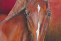 Portret paard 60 x 80 olieverf op linnen