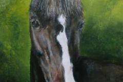 portret-pony   30 x 40 olieverf op paneel